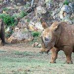The lovely rhino