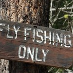 Fly Fishing everywhere
