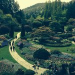 Butchart Gardens Awesome!