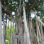 arbre gigantesque