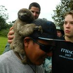 Baby 3-toed sloth kept as a pet at the Sangregorio Village