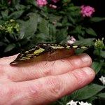 dans la serre aux papillons