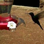 ca grouille de colibris