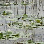 Water lilies filled the pond