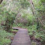 Wooden walkway trail