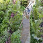 Jungle Walkways