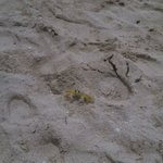 Find the crab...great sea life abounds at this property