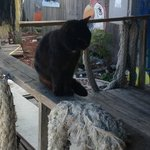 Cats always know where the best seafood restaurants are!