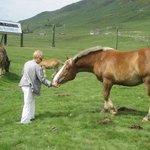 En el Plá de Beret , caballos sueltos y diferente ganado