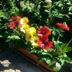fiori in esterna