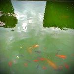 Goldfische im Becken