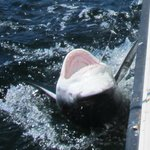 The business end of the shark!
