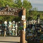 Watson Lake Signpost Forest