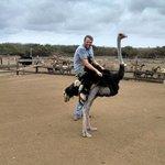 Ostrich RIDING!!!!
