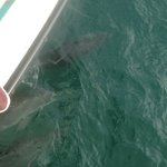 The friendly dolphins we swam with!