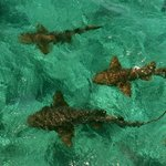 Nurse Sharks and Stingrays