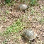 Tortoises the best asset