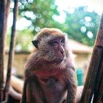 Railay Beach - Krabi - Thailand - Wandervibes - mean muggin monkey