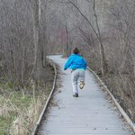wooded boardwalks go through wetlands