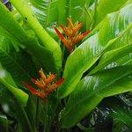 Местная растительность после дождя