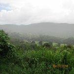 Beautiful rain forest park