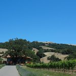 driving up to the winery