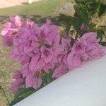 très bien fleuri