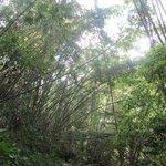 Walk through nature