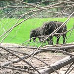 wild elephant view from boat ride