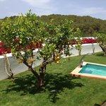 Spa and gym lemon tree garden
