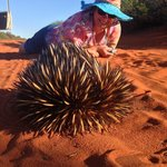 An awesome 'Echidna Encounter' on a 4wd Tour I Francois Peron National Park