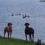 Our boys enjoying the lake