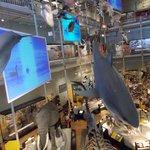 Natural history exhibit (X3 floors)