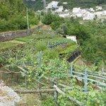 Along the walk down to Amalfi