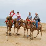 Edwards Family Camel Ride