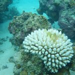 Snorkeling with Aitutaki Adventure