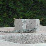 Яшка, жил на нашем балконе