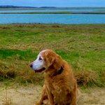 Dog walk at the beach