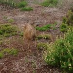 You will find these happy deer all around the Sea Breeze. We found this one 4 blocks down at the