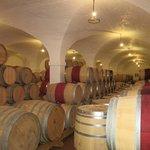 Nevers Barrels @ Klein Constantia Estate