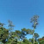 Selva y cielo.