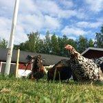 Lesser Spotted Chicken