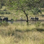 Elephants at watering hole (seen from tea room)