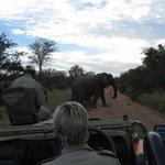 Moshe (tracker), Anen (ranger) and elephant