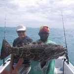 Picture of the year , grouper