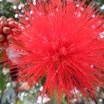 Flores de un árbol