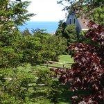 Rosebud's View