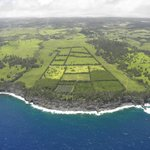 Agriculture south of Hilo
