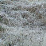 Morning frost - minus 3 degrees