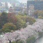 桜がきれいに